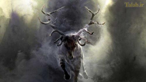 عکس هایی از زیباترین حیوانات فانتری
