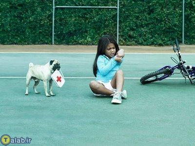 سگ های خانگی باهوش ( تصویری )
