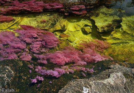 تصویر رودخانه ای 5 رنگ در کلمبیا