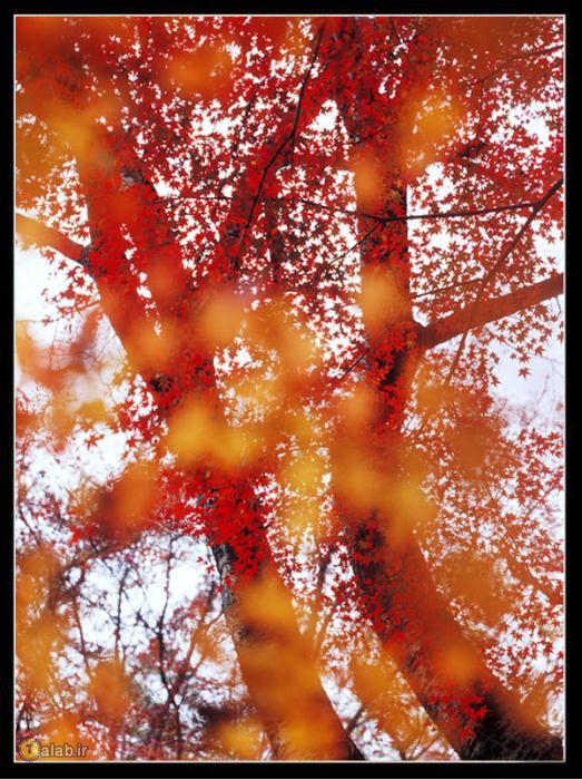 عکس های زیبای طبیعت در فصل پاییز