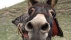 ببینید این اسب چطور دوربین را هدف میگیرد (کلیپ طنز)