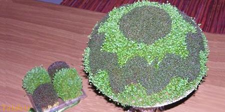 آموزش کاشت سبزه دو رنگ برای عید نوروز