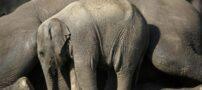 عکسهایی از رابطه زیبای مادر و کودک در دنیای حیوانات