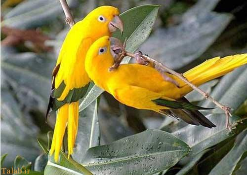 تصاویری از زیباترین پرندگان