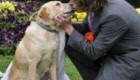 ازدواج عجیب پسر 20 ساله با سگ ماده + عکس