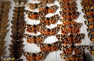 گرانت عجیب ترین موزه جانور شناسی جهان