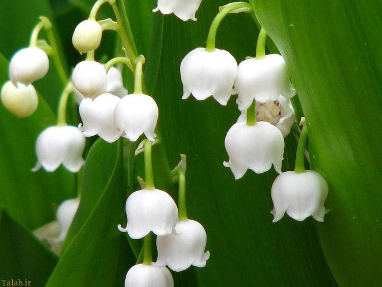 آشنایی با سمی ترین گیاهان تزئینی زیبا