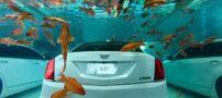 خودروی ضد آب و لوکس کادیلاک + عکس