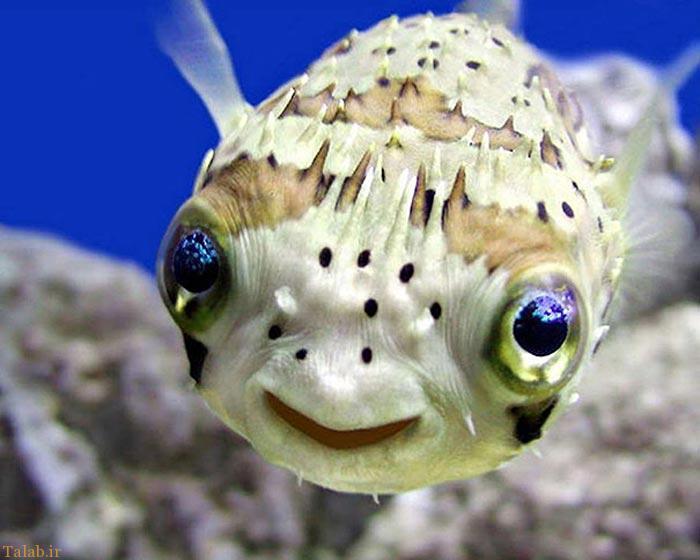 عکس های جالب از لبخند حیوانات