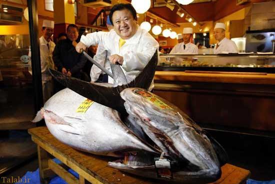 قیمت نجومی این تن ماهی (عکس)