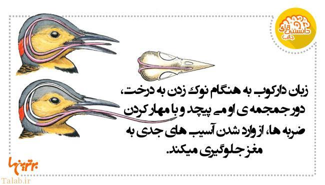 دانستنیهای خواندنی به صورت عکس (6)