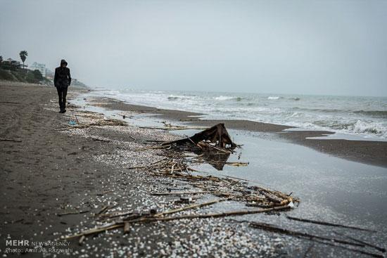 عکس های زشتی های سواحل مازندران