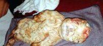 تولد بزغاله ای عجیب شبیه انسان +عکس