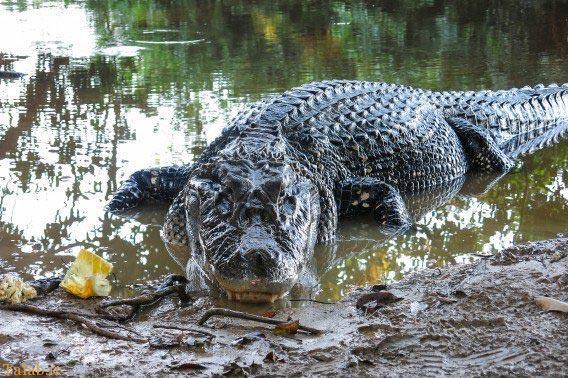 وحشتناک ترین موجودات دنیا در جنگل های آمازون + تصاویر