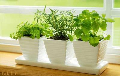 مقابله با پشه با گیاهان ضد پشه در منزل