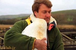 رابطه عاشقانه مردی با یک پرنده قو (عکس)