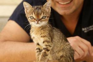 گربه بامزه مبتلا به سندروم داون (عکس)