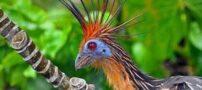 پرنده گان رکورد دار گینس را بشناسید (عکس)