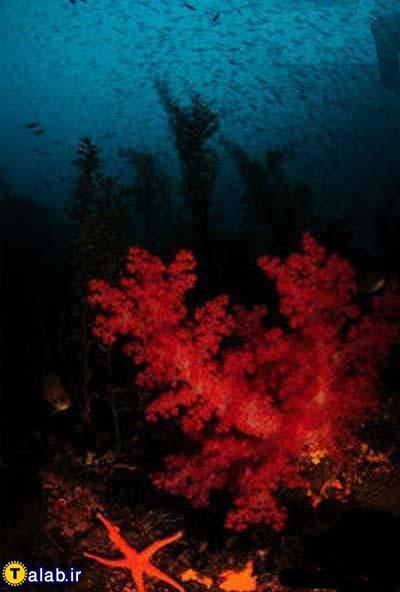 تصاویر بسیار زیبا از اعماق اقیانوس
