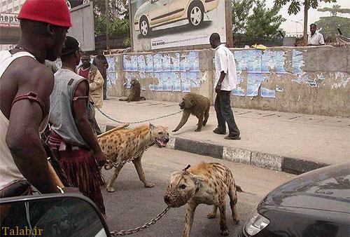 نگهداری از حیوانات وحشی تفریح مردان آفریقایی (+عکس)