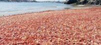 هجوم وحشتناک خرچنگ ها به کالیفرنیا + عکس