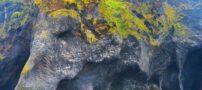 صخره ای بسیار شگفت انگیز شبیه فیل در ایسلند + تصاویر