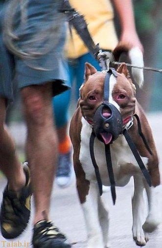 خرید و فروش سگ وحشی آدم خوار در ایران (عکس)