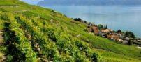 تصاویری از مناظر طبیعی کشور سوئیس