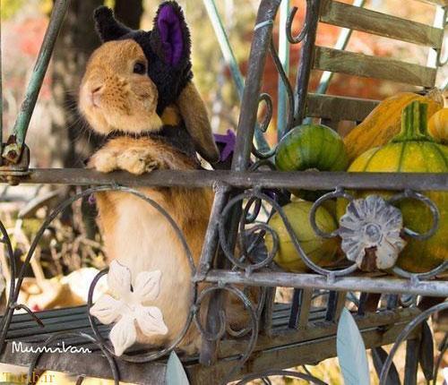 خرگوش خوش تیپی که مدلینگ شد (عکس)
