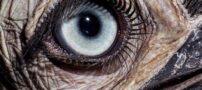 عکس های دیدنی از چشم حیوانات