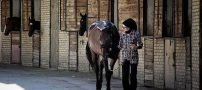 تنها بانوی ایرانی نعلبند اسب را بشناسید (+عکس)