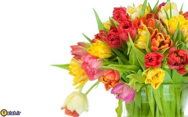 فال تعداد نوع و رنگ گل ها