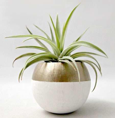 گیاهان مناسب چیدمان خانه های مدرن