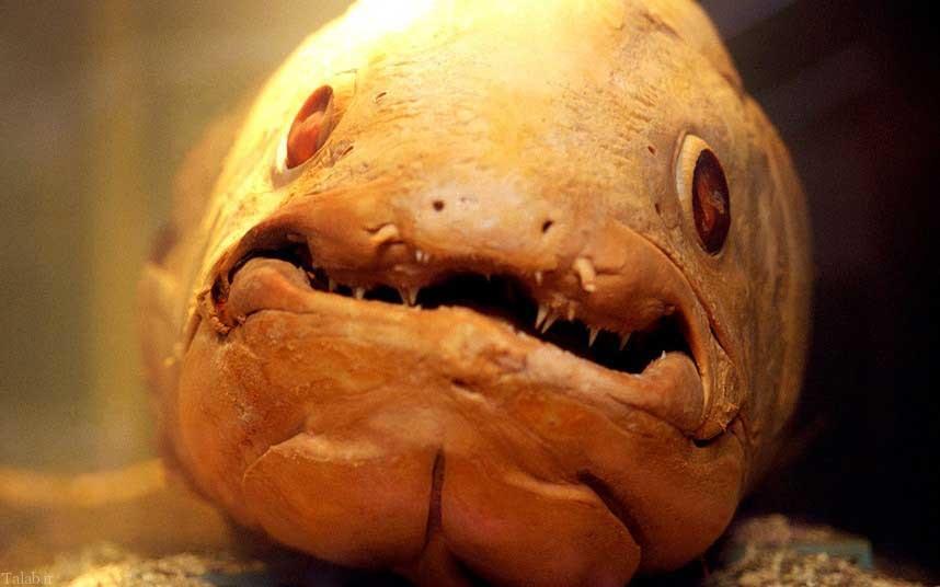 تصاویر از زشتترین ماهی های دنیا