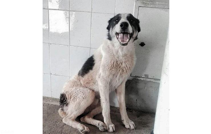 دستگیری حیوان آزار توسط پلیس فتا !+ تصاویر