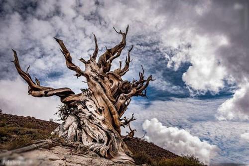 تصاویر شگفت انگیز ترین درخت های جهان در طبیعت