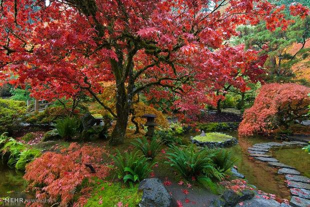 عکس هایی از باغ های زیبا با طراحی خاص