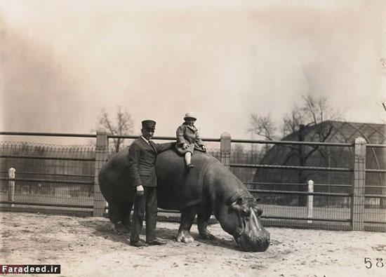 عجیب ترین حیوان سواری های تاریخ را ببینید ( تصویری)
