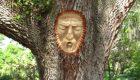 حکایت درخت یا انسان