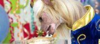 عکس های دیدنی از زندگی خوش شانس ترین سگ جهان