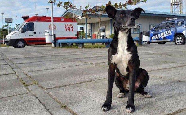 سگ وفادار به صاحبش بعد از فوت وی (+ تصاویر)