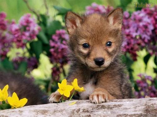 عکس های ناز از بچه حیوانات ناز