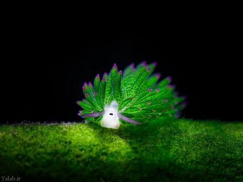 عکس هایی از موجودات زیبا در اعماق اقیانوس ها