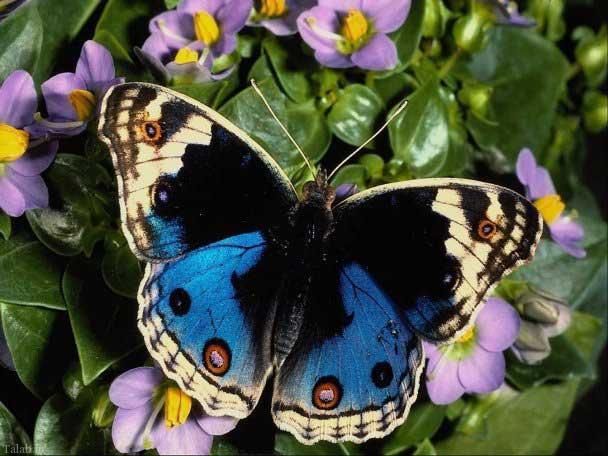 عکس های زیبا از پروانه های جالب جهان