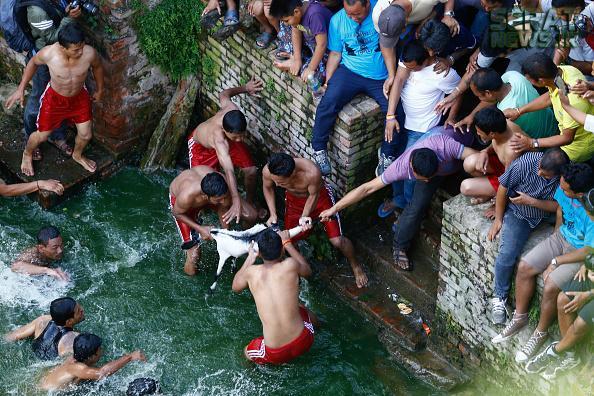 جشنوارهای عجیب و وحشیانه خفه کردن بزها در آب !+ تصاویر