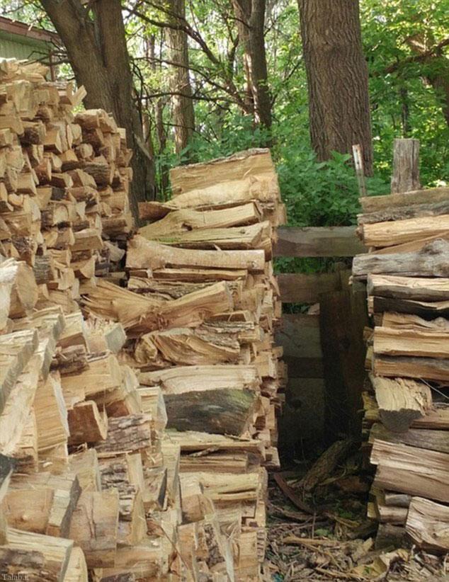 تست هوش انبار چوب (عکس)