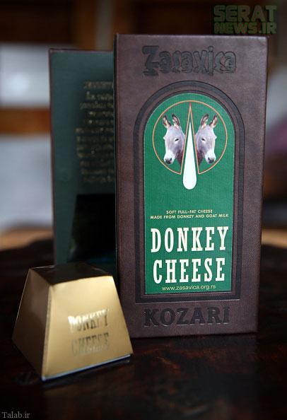 گران ترین پنیر دنیا از شیر خر !+ تصاویر