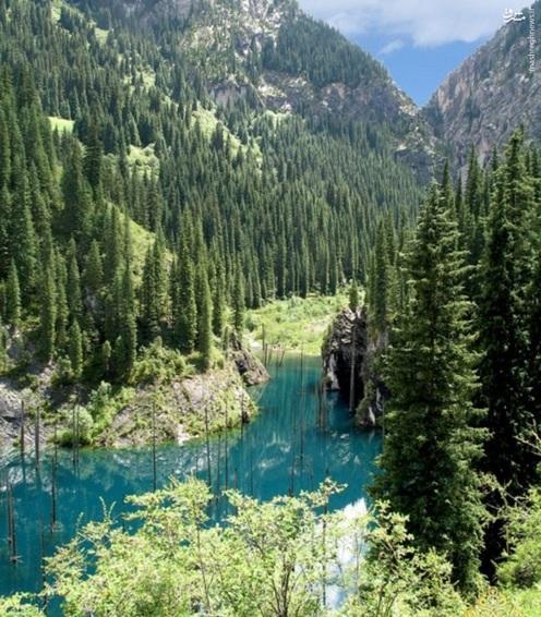 تصاویری از جنگلی زیبا در زیر آب