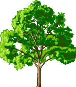 داستان جالب درخت مشکلات