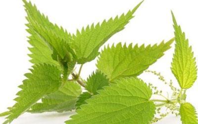 درمان کم خونی و فقر آهن با گیاهان دارویی